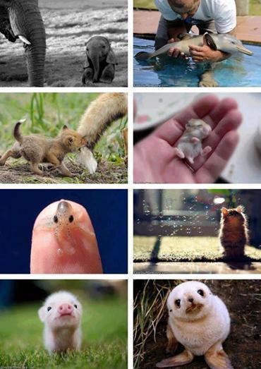 Beautiful world of Baby animals