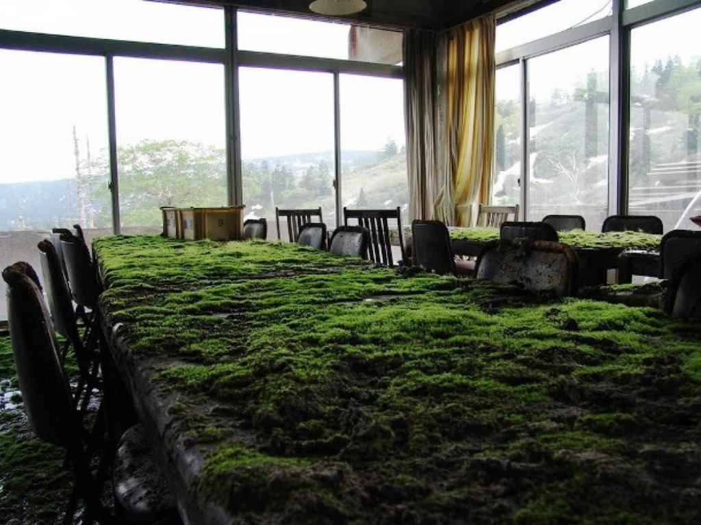 Grass Grow on Office Table