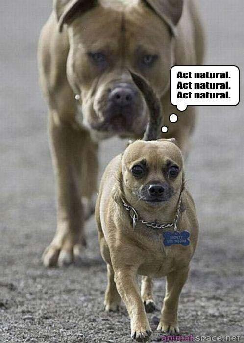 Act natural... Hahahaha