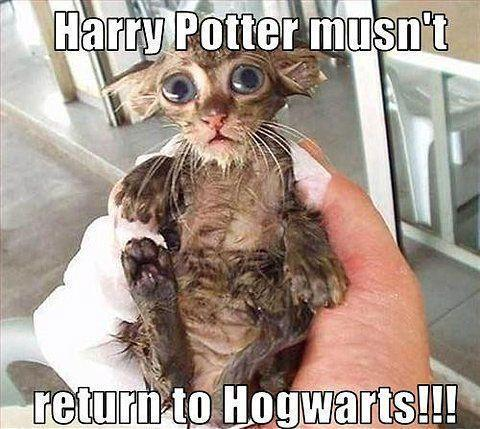 Harry Potter mustn't return to Hogwarts!