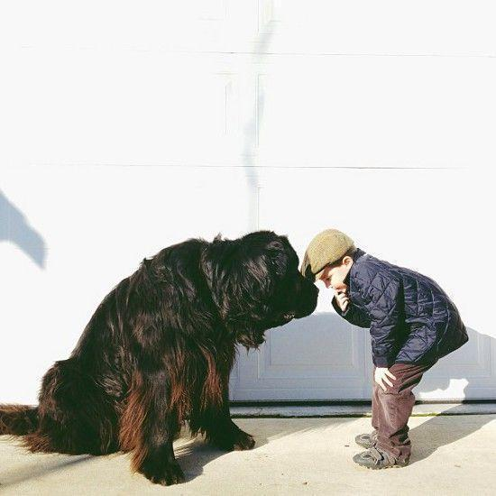 A boy and his Newfoundland dog