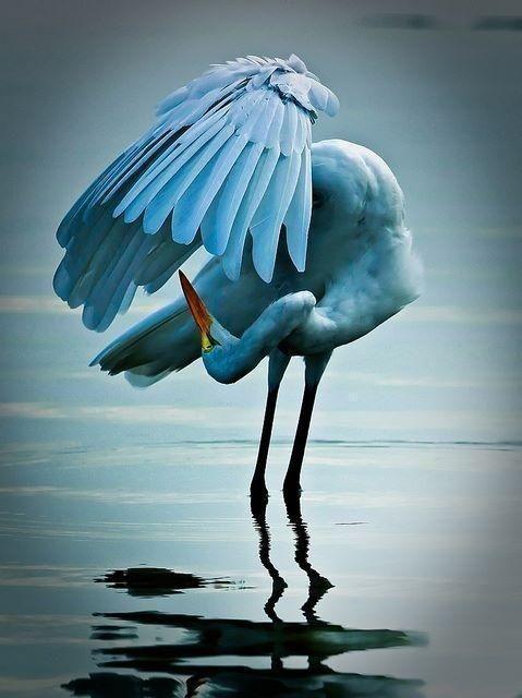 Blue Grace Delightfully