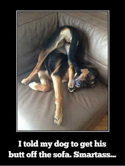 Smartass pup.