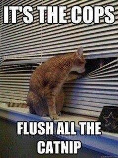 Cat Humor...