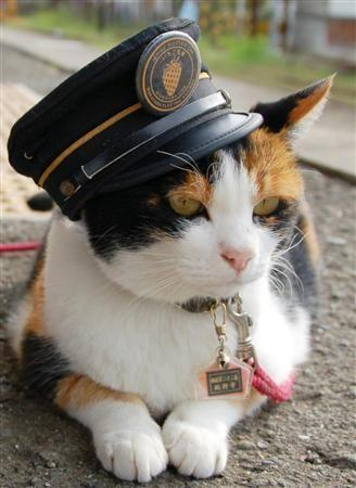Tama Cat Of Japan, Tama Is The Stationmaster And Operating Officer Of