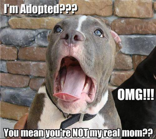 OMG!!! Funny Dog Photos