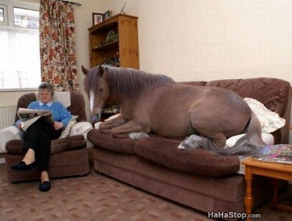 Just My Pet Horse