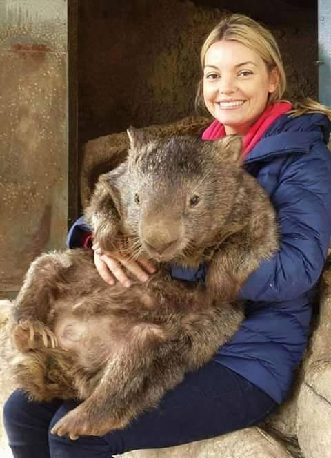 Partick the oldest and largest living wombat in the world