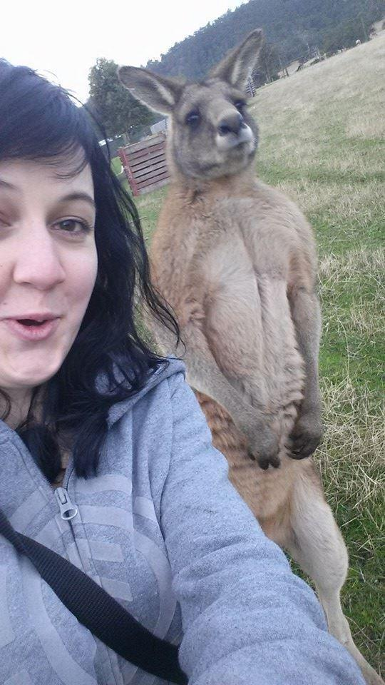 Took a selfie with this a kangaroo just at the right time