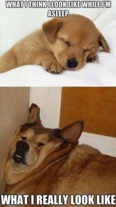 How Fat Dogs Look While Sleeping