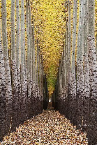 Walking Towards The Light....Tree Farm near Boardman, Oregon