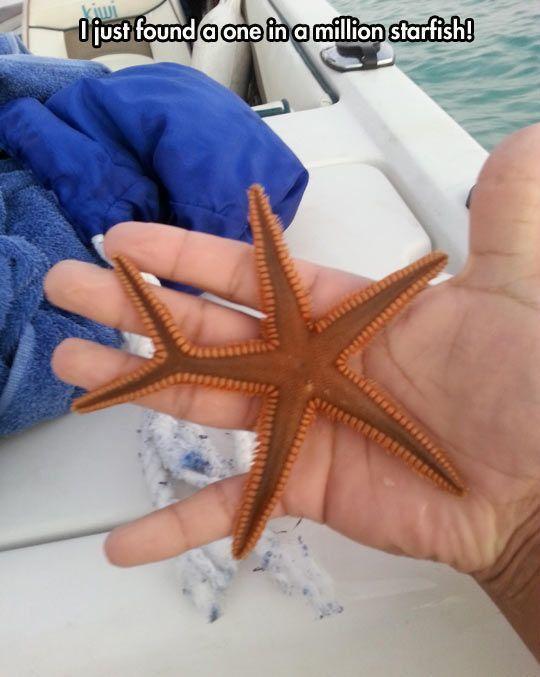 Strange starfish...