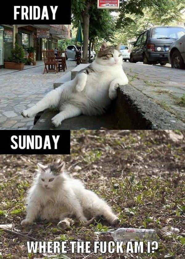 Friday Vs Sunday