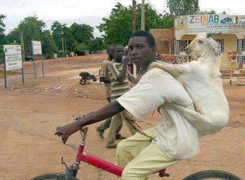 Goat on black Man
