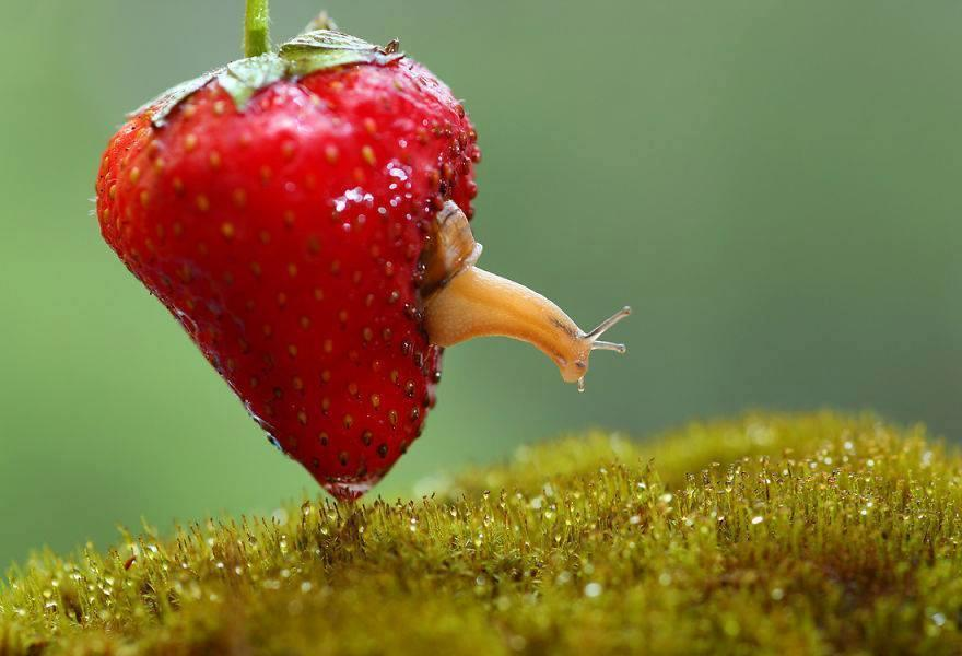 Magical Photos of Macro World Snails