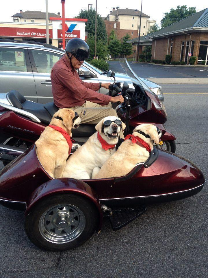 Man's best friends ride sidecar