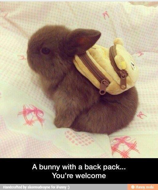 a bunny with a bacj pack you've welcome