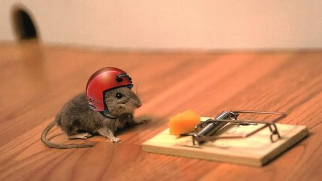 mouse with helmit.