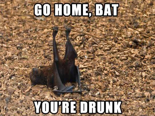 Go home, bat…