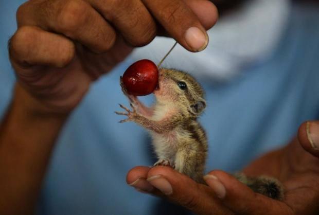 An orphan Squirral