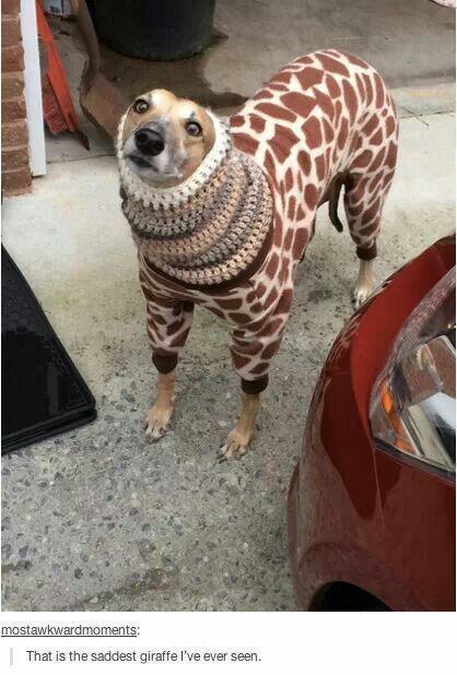 Sad giraffe.