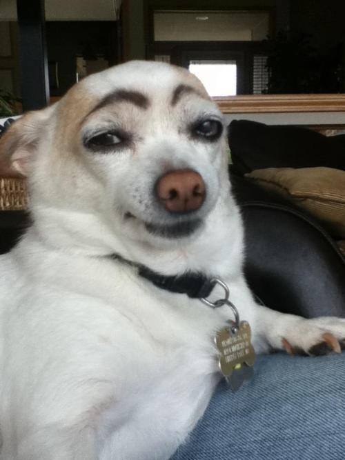 Bored,  Draw eyebrows on your dog and laugh until his next bath.. haha