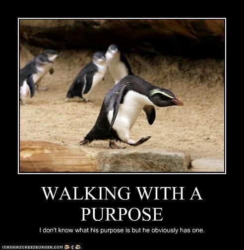 Walking With a Purpose
