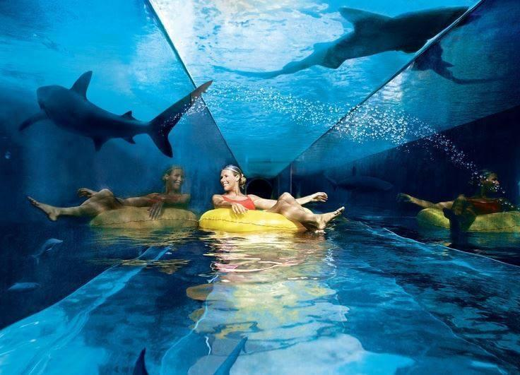 Amazing Water Parks with sharks