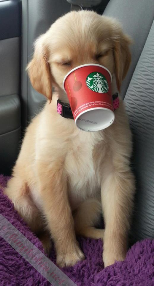 If you ask for a puppuccino at Starbucks, they will give you a cup of