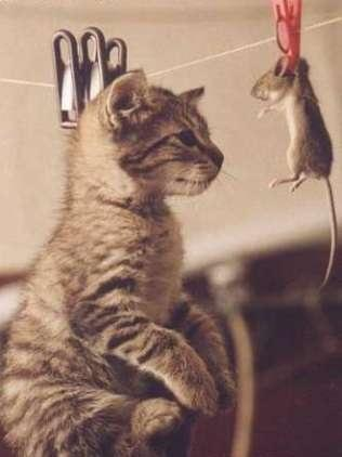 hanging cat and mouse