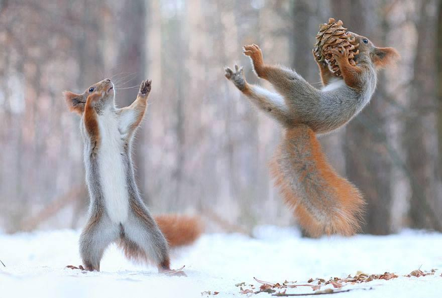 The Cutest Squirrel Photo Session Ever