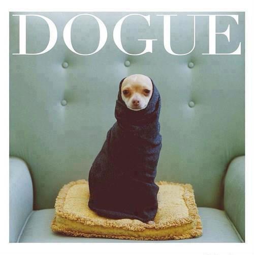 dogue. I'm dying hahahaha