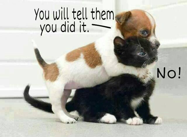 Tell them You Do It... LOL