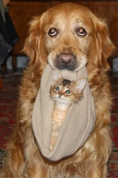 Dog Cat Friendship