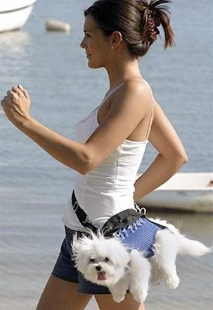 Because walking your dog would look ridiculous