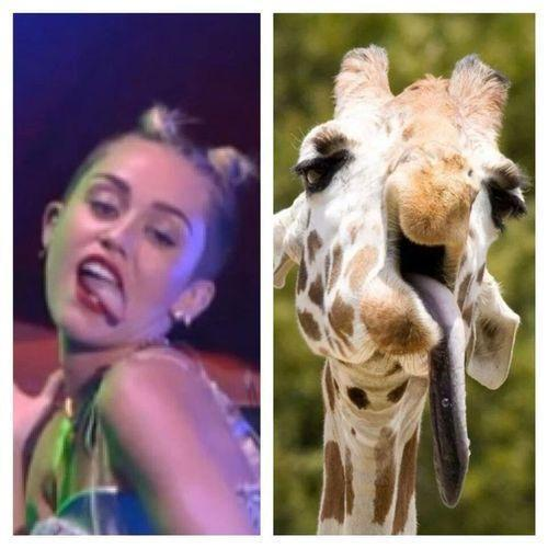Miley Cirus Vs Giraffe in VMA 2013.... Too Funny