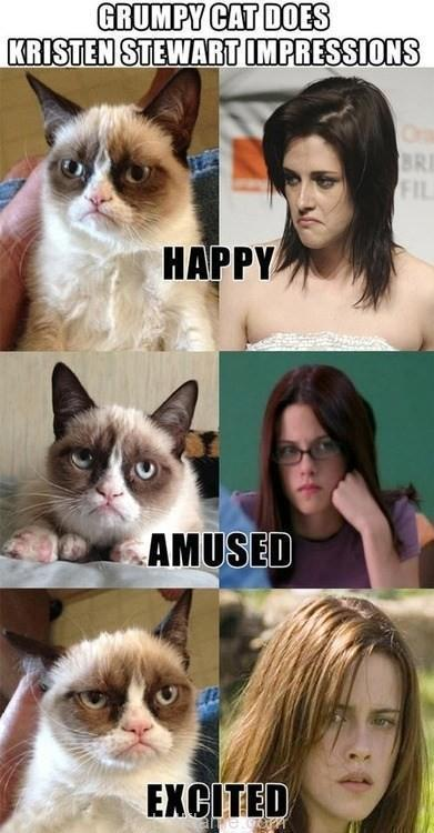 Grumpy Cats Kristen Stewart Impressions