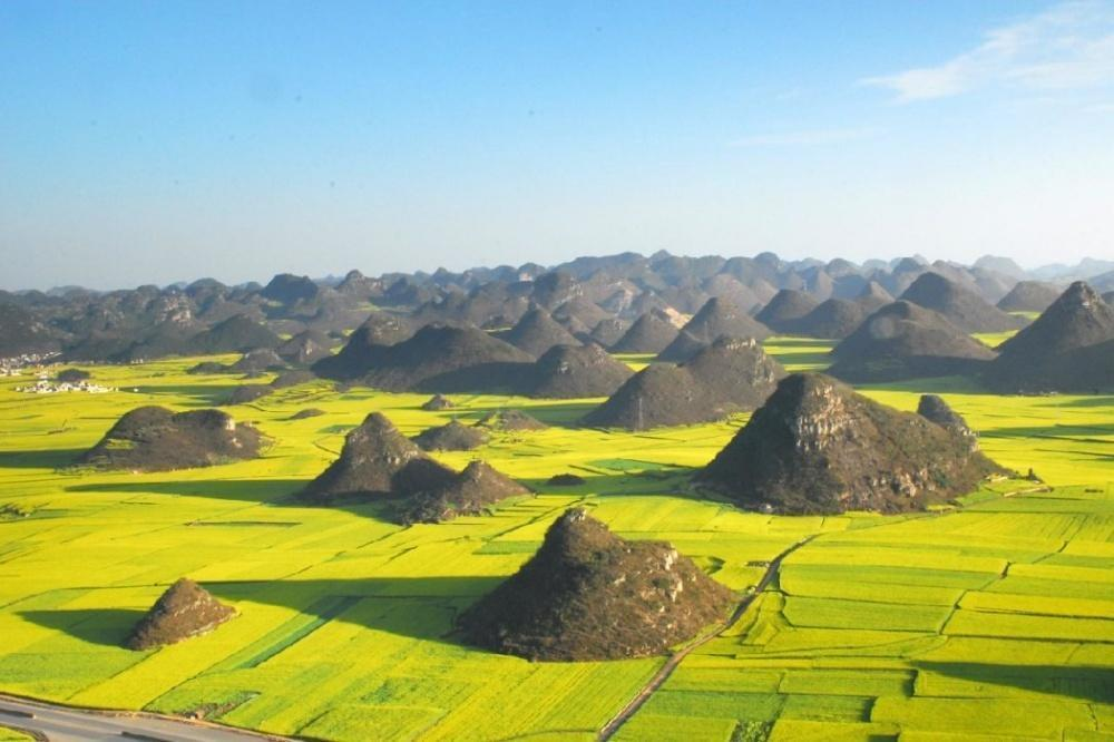 Rapeseed fields in Luoping, China
