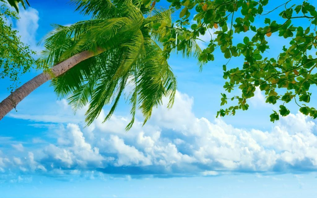 amazing nature background wallpaper tree cute wave fastest